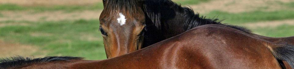 horses-close-up.jpg