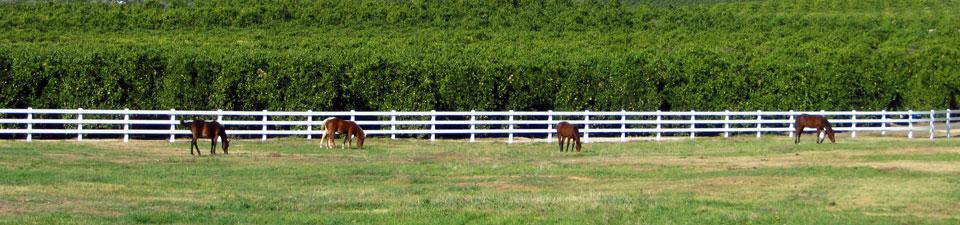 horses-oranges.jpg