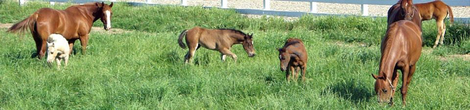horses-playing.jpg